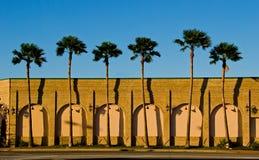 Por do sol do sul com palmeira e o céu azul Foto de Stock