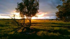 Por do sol do tempo de mola Fotografia de Stock Royalty Free