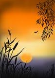 Por do sol do verão Imagens de Stock