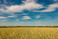 Por do sol do verão na paisagem dourada do campo, natureza lindo, alemão Fotos de Stock