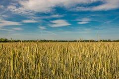 Por do sol do verão na paisagem dourada do campo, natureza lindo, alemão Imagem de Stock Royalty Free