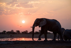 Por do sol dos elefantes Imagem de Stock Royalty Free