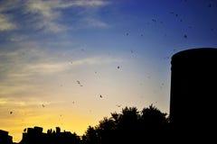 Por do sol dos pássaros e das silhuetas de voo na cidade imagem de stock