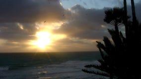 Por do sol 2 dos SWAMIS da tempestade do vento da costa de Califórnia vídeos de arquivo