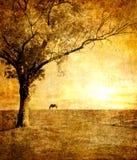 Por do sol dourado ilustração royalty free