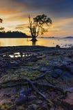 Por do sol dourado Bintan maravilhoso Indonésia fotos de stock royalty free