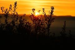 Por do sol dourado da hora atrás de algumas árvores fotografia de stock