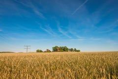 Por do sol dourado do verão no campo de exploração agrícola e no moinho de vento, natureza lindo Fotografia de Stock Royalty Free