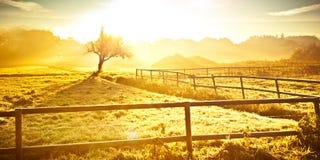 Por do sol dourado impressionante no outono fotos de stock royalty free