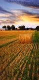 Por do sol dourado sobre o campo de exploração agrícola Fotografia de Stock