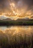 Por do sol dourado sobre um pântano calmo Fotos de Stock