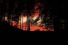 Por do sol dramático através das árvores Imagens de Stock Royalty Free