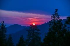 Por do sol dramático na floresta da sequoia imagens de stock