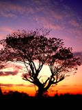 Por do sol e árvore 01 Fotos de Stock Royalty Free