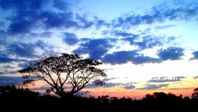 Por do sol e árvore 03 Imagem de Stock