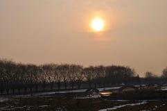 Por do sol e árvore Imagens de Stock