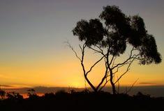 Por do sol e árvore do mar Fotografia de Stock Royalty Free