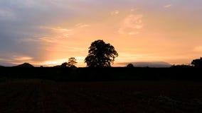 Por do sol e árvore grande na plantação 4k do mandioc vídeos de arquivo