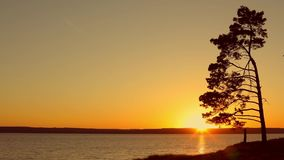 Por do sol e árvore só no rio Rússia filme