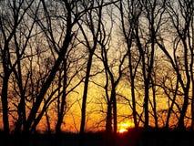 Por do sol e árvores Fotografia de Stock
