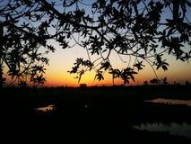 Por do sol e árvores da noite Imagem de Stock