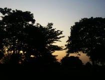 Por do sol e árvores da noite Fotografia de Stock Royalty Free