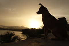Por do sol e cão Imagem de Stock Royalty Free