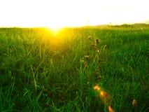 Por do sol e campo verde Fotos de Stock Royalty Free