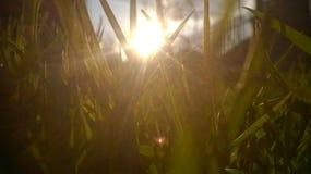 Por do sol e grama Foto de Stock Royalty Free