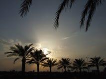 Por do sol e palmas em Barém fotografia de stock
