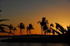 Por do sol e palmeiras. Imagens de Stock
