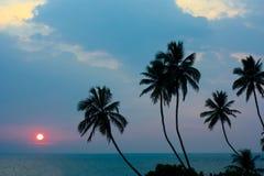Por do sol e palmeiras imagem de stock