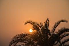 Por do sol e planta foto de stock