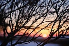 Por do sol e ramos Imagem de Stock Royalty Free