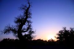 por do sol e silhueta da árvore Fotos de Stock Royalty Free