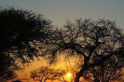 Por do sol em África Fotografia de Stock Royalty Free