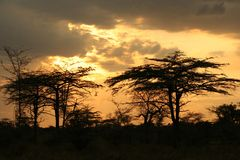 Por do sol em África Foto de Stock Royalty Free