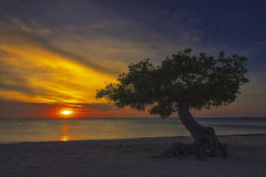 Por do sol em Aruba com árvore de Divi Divi Imagem de Stock Royalty Free