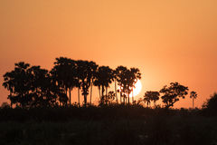 Por do sol em Botswana África Foto de Stock