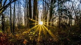 Por do sol em Brea Island, Columbia Britânica, Canadá Imagens de Stock Royalty Free