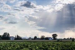 Por do sol em campos cultivados Imagens de Stock Royalty Free