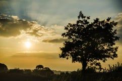 Por do sol em campos de exploração agrícola com árvore e o céu nebuloso bonito, Cornualha, Reino Unido foto de stock