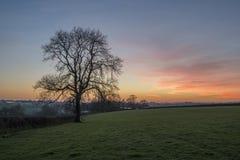 Por do sol em campos de exploração agrícola com árvore e o céu nebuloso bonito, Cornualha, Reino Unido fotografia de stock