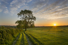 Por do sol em campos de exploração agrícola com árvore e o céu nebuloso bonito, Cornualha, Reino Unido fotografia de stock royalty free