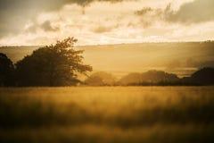 Por do sol em campos de exploração agrícola com árvore e o céu nebuloso bonito, Cornualha, Reino Unido imagem de stock royalty free