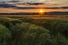 Por do sol em campos de exploração agrícola com árvore e o céu nebuloso bonito, Cornualha, Reino Unido foto de stock royalty free