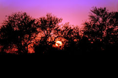 Por do sol em África do Sul Fotografia de Stock