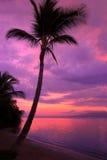 Por do sol em Maui Foto de Stock