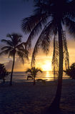 Por do sol em palmeiras na praia de Bayahibe Foto de Stock