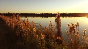 Por do sol em pantanais de Florida video estoque